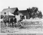 Farm scene in Petersboro, Utah, 1908, depicts a side-delivery rake in operation