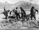CCC workers collecting tubers for transplanting, 1941