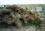 Pile of dried shrubbery