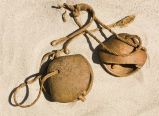 Somali camel bells with collars attached;