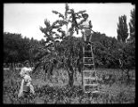 A couple pose in their orchard, the man smoking a cigar (1 of 2);