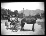 Two women and a man in a horse-drawn buggy on the streets of Brigham City;