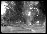 View of people camping in a grove of trees;