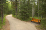 Bench and walkway through a forested area in Kananaskis, Alberta, Canada;