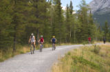 Bicyclists on a path through a forested area in Kananaskis, Alberta, Canada;