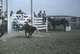 Children riding calves during the 4th of July Celebration Rodeo (GCCS_CDR031_2)