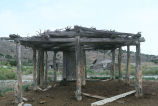 Animal shelter with straw roof and earthfast poles on the Lucas Ranch (GCCS_CTC009_6)