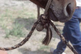 Close-up of reigns on horse belonging to Gordon Stanford of Jordan Valley, Oregon, Gamble Ranch...