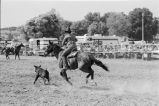 Calf-roping competition during the Fourth of July rodeo (GCCS_BCF231196_6_11)