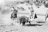 """""Buckaroo types,"""" riders on horseback """"working""""..."