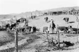 """""Working cattle,"""" riders sorting cattle after fall roundup..."