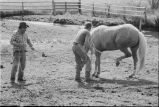 Horse being shoed at Nelson Ranch, Junction Valley, Utah (GCCS_BHC25552_1)