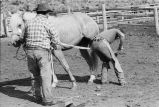 Horse being shoed at Nelson Ranch, Junction Valley, Utah (GCCS_BHC25552_3)