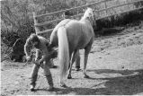 Horse being shoed at Nelson Ranch, Junction Valley, Utah (GCCS_BHC25552_4)