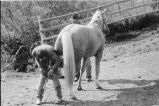 Horse being shoed at Nelson Ranch, Junction Valley, Utah (GCCS_BHC25552_5)
