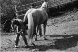 Horse being shoed at Nelson Ranch, Junction Valley, Utah (GCCS_BHC25552_6)