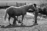 Horse being shoed at Nelson Ranch, Junction Valley, Utah (GCCS_BHC25552_7)