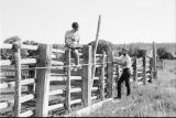 Debbie Randall and Roger Roper measuring the rodeo grounds (GCCS_BTC25587_22)
