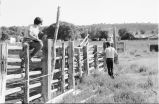 Debbie Randall and Roger Roper measuring the rodeo grounds (GCCS_BTC25587_25)