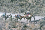 Two boys, Tom Tanner and friend, help with cattle drive (GCCS_CCF025_8)