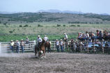Calf roping event in the 4th of July rodeo (GCCS_CCE018_1)