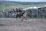 Calf roping event in the 4th of July rodeo (GCCS_CCE018_2)