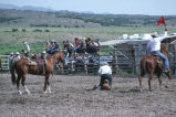 Calf roping event in the 4th of July rodeo (GCCS_CCE018_3)