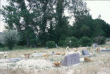 View of cemetery (GCCS_CCE005_2)