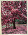 Card depicting a tree in pink blossoms, inscribed and presented to J. Bracken Lee by  Margaret Lee...