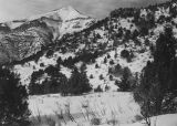 Card Canyon study area in Logan Canyon, Utah, 1950 (2 of 2);
