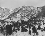 Card Canyon study area in Logan Canyon, Utah, 1950 (1 of 2);