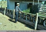 Feed rack, Holbrook, Idaho, 1975