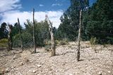 Cedar post and barbed wire fence, Parawan, Utah, 1957
