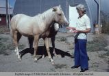 Horse and donkey, Malad, Idaho, 1978