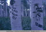 Birch bark carvings, Cache National Forest, Utah and Idaho, 1971