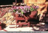 Old mine car as flower planter