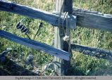 Split rail fence detail, Eatonville, Washington, 1964