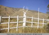 Pole fence, Cokeville, Wyoming, 1965
