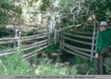 Pole fence in stream; Oakley, Utah, 1973