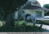 Horse standing to rein, Almo, Idaho Post Office, 1970