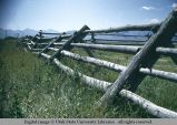 Jack fence, Dell, Montana, 1948