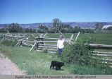 Jack fence in zig-zag pattern, Wyoming, 1967