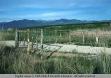 Fence of cedar posts and wire, under construction, Cache Valley, Utah, 1977