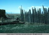 Vertical slab windbreak, Willard, Utah, 1977