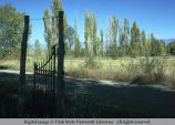 Live fence of poplars, Weston, Idaho, 1974
