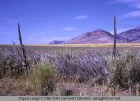 Picket fence, between Elba and Almo, Idaho, 1970