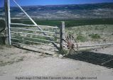 Pole gate and cattle guard, Wyoming, 1967
