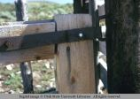 Gate hinge, western Wyoming, 1973