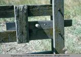 Gate latch, Oakley, Utah, 1977-07