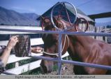 Gate and horse, Logan, Utah, 1968